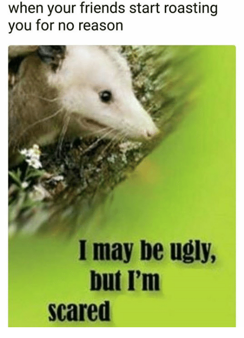 Friends, Ugly, and Reason: when your friends start roasting  you for no reason  I may be ugly  but I'm  scared