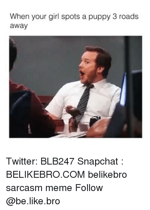 Be Like, Meme, and Memes: When your girl spots a puppy 3 roads  away Twitter: BLB247 Snapchat : BELIKEBRO.COM belikebro sarcasm meme Follow @be.like.bro