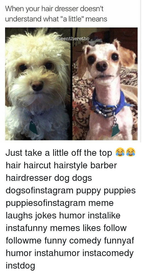 Barber Dogs And Funny When Your Hair Dresser Doesn T Understand What