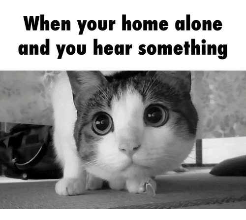 When Your Home Alone And You Hear Something