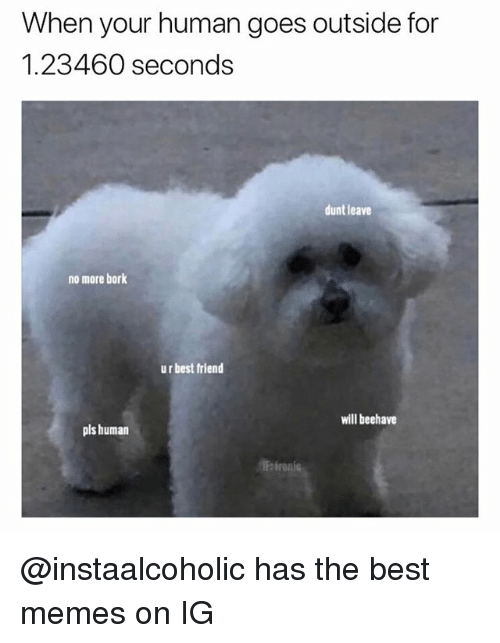 Best Friend, Funny, and Memes: When your human goes outside for  1.23460 seconds  dunt leave  no more bork  ur best friend  will beehave  pls human  Feironie @instaalcoholic has the best memes on IG