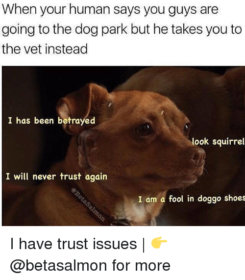 Memes, Shoes, and Squirrel: When your human says you guys are  going to the dog park but he takes you to  the vet instead  I has been betrayed  look squirrel  I will never trust again  I am a fool in doggo shoes I have trust issues | 👉 @betasalmon for more