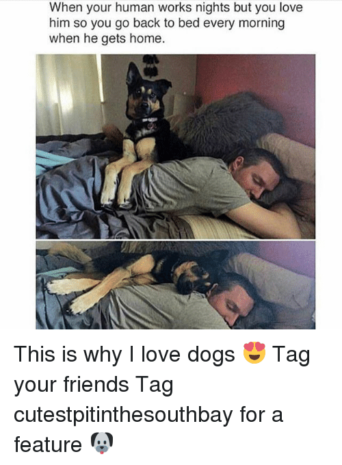 Dogs, Friends, and Love: When your human works nights but you love  him so you go back to bed every morning  when he gets home This is why I love dogs 😍 Tag your friends Tag cutestpitinthesouthbay for a feature 🐶
