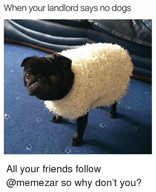 Dogs, Friends, and British: When your landlord says no dogs All your friends follow @memezar so why don't you?