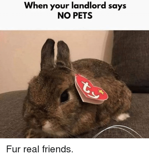 Dank, Friends, and Real Friends: When your landlord says  NO PETS Fur real friends.