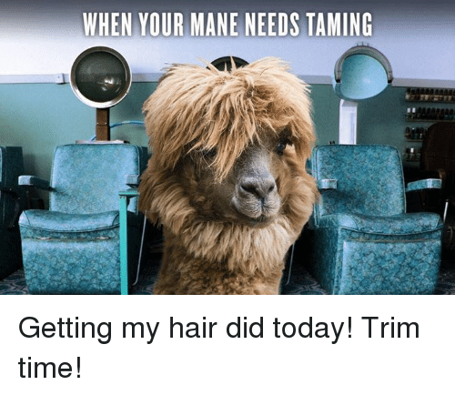 Discussion sur l'étoile du 12 avril 2018 - Page 2 When-your-mane-needs-taming-getting-my-hair-did-today-7418647