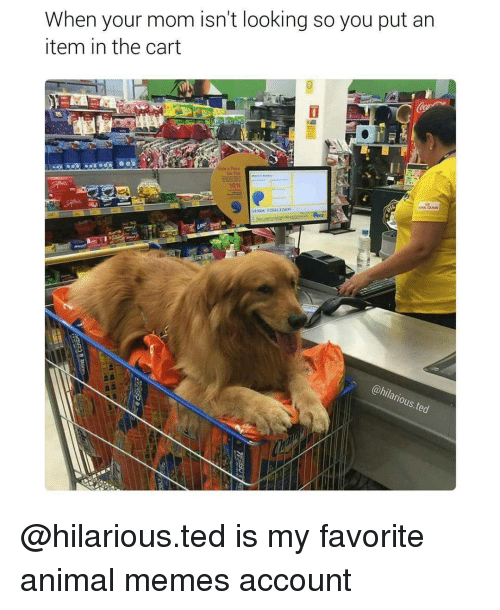Memes, 🤖, and Account: When your mom isn't looking so you put an  item in the cart  VENDAFIDELIZADO @hilarious.ted is my favorite animal memes account