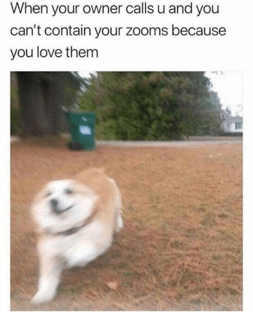 Love, Memes, and 🤖: When your owner calls u and you  can't contain your zooms because  you love them