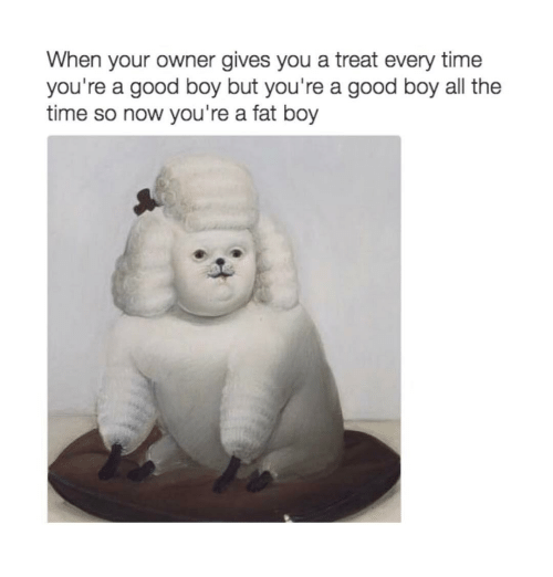 Funny, Fat Boys, and Fat Boy: When your owner gives you a treat every time  you're a good boy but you're a good boy all the  time so now you're a fat boy