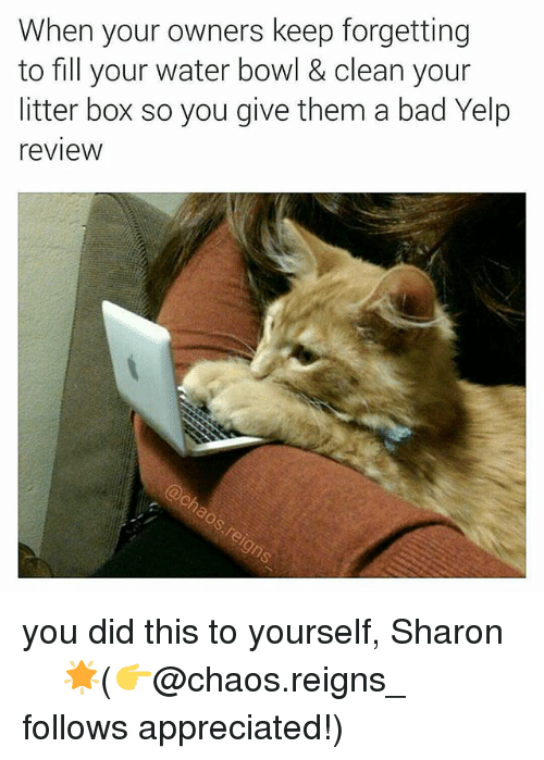 Bad, Memes, and Water: When your owners keep forgetting  to fill your water bowl & clean your  litter box so you give them a bad Yelp  review you did this to yourself, Sharon ☆☆☆☆🌟(👉@chaos.reigns_ follows appreciated!)