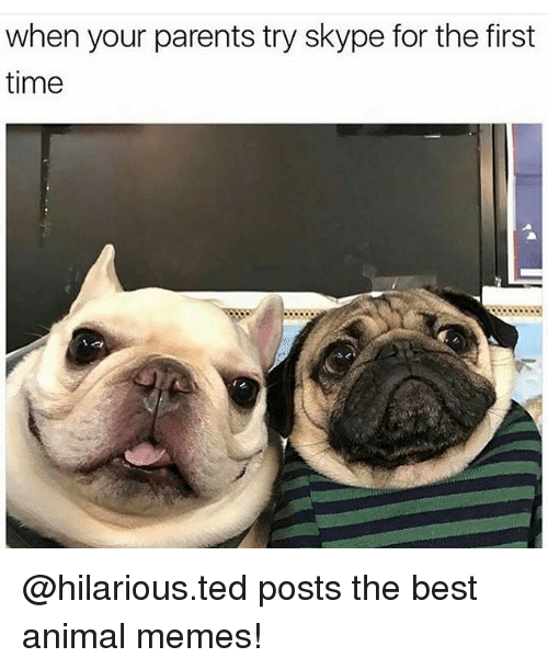 Memes, Ted, and Skype: when your parents try skype for the first  time @hilarious.ted posts the best animal memes!