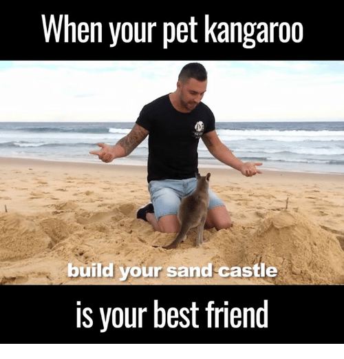 when your pet kangaroo build your sand castle is your 6074636 ✅ 25 best memes about sand castle sand castle memes
