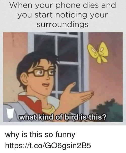 Funny, Memes, and Phone: When your phone dies and  you start noticing your  surroundings  0  what kind of bird is  this? why is this so funny https://t.co/GO6gsin2B5