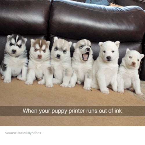 Puppies, Run, and Puppy: When your puppy printer runs out of ink  Source: tastefullyoffens.