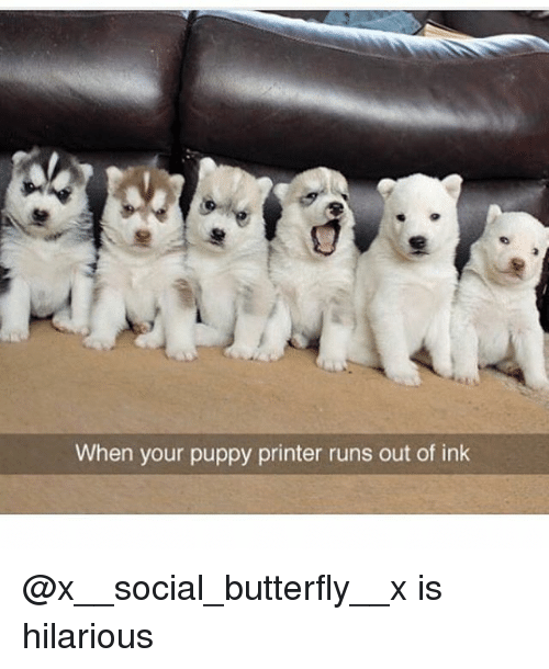 Funny, Butterfly, and Puppy: When your puppy printer runs out of ink @x__social_butterfly__x is hilarious