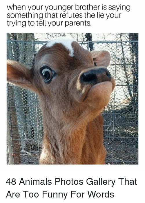 Animals, Funny, and Parents: when your younger brother is saying  something that refutes the lie your  trying to tell your parents. 48 Animals Photos Gallery That Are Too Funny For Words