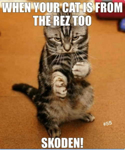 when yourcat is from the rez too ss skoden 27249637 when yourcat is from the rez too ss skoden! native american