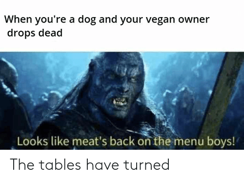 Vegan, Back, and Boys: When you're a dog and your vegan owner  drops dead  Looks like meat's back on the menu boys! The tables have turned