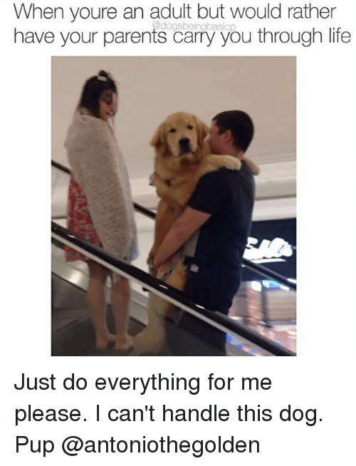 Life, Memes, and Parents: When youre an adult but would rather  2dogs basicp  have your parents carry you through life Just do everything for me please. I can't handle this dog. Pup @antoniothegolden