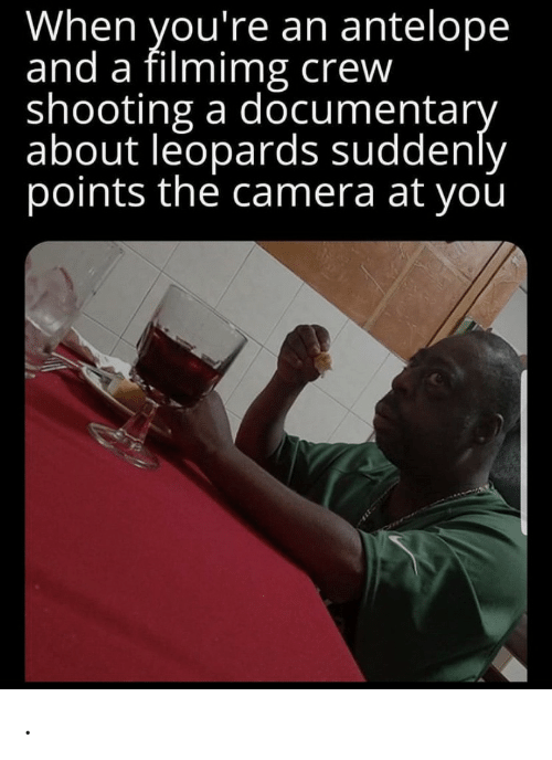 Camera, Crew, and You: When you're an antelope  and a filmimg crew  shooting a documentary  about leopards suddenly  points the camera at you .