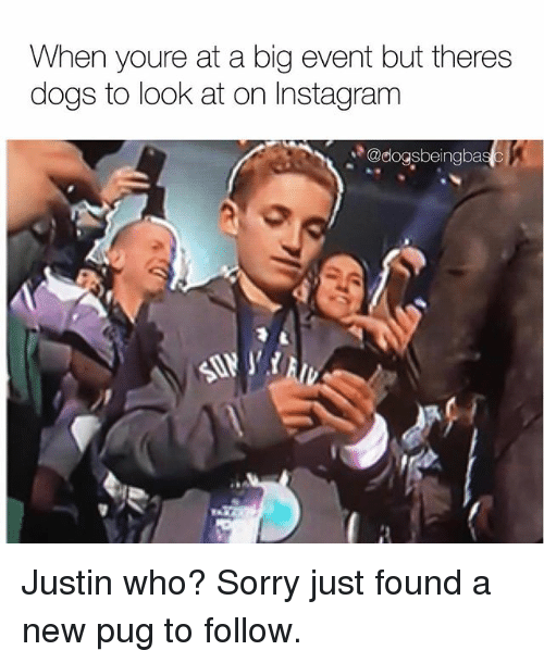 Dogs, Instagram, and Memes: When youre at a big event but theres  dogs to look at on Instagram  @dogsbeingba Justin who? Sorry just found a new pug to follow.