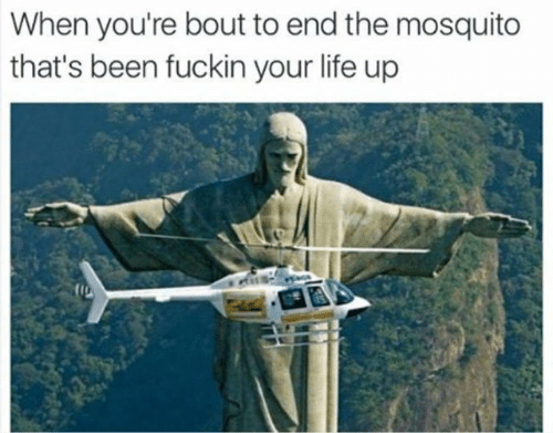 Life, Been, and Mosquito: When you're bout to end the mosquito  that's been fuckin your life up