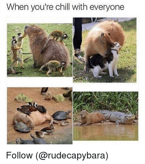 Chill, Funny, and Meme: When you're chill with everyone Follow (@rudecapybara)
