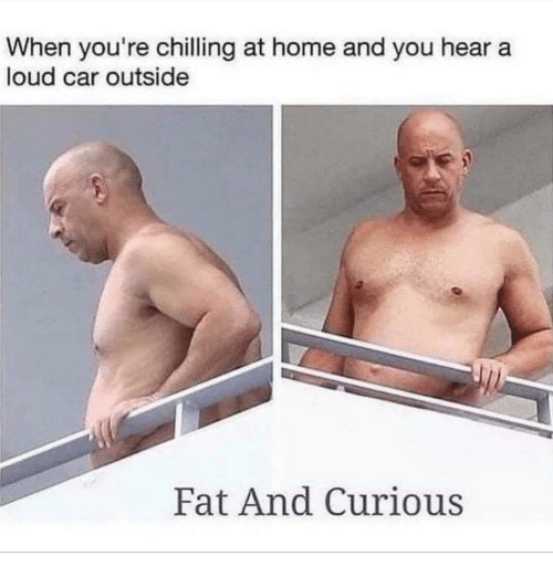 Home, Fat, and Car: When you're chilling at home and you hear a  loud car outside  Fat And Curious
