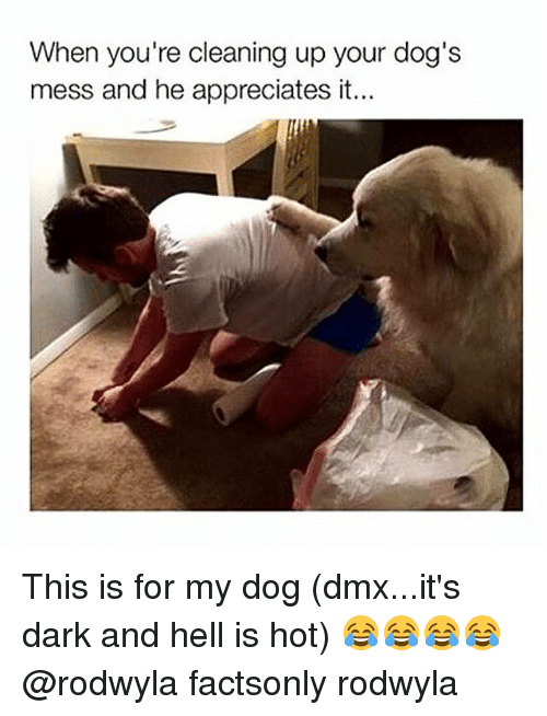 dmx and my dogs bite