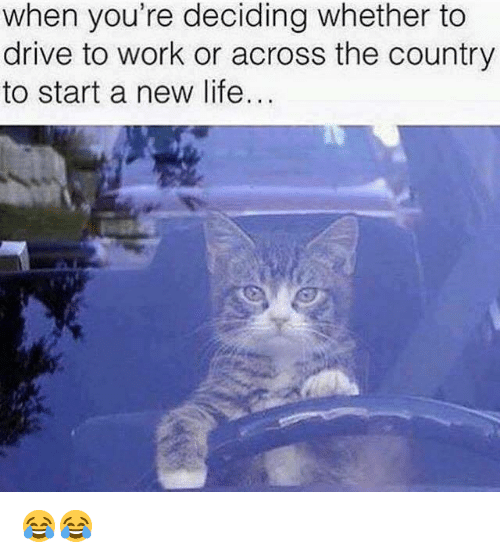 Life, Work, and Grumpy Cat: when you're deciding whether to  drive to work or across the country  to start a new life... 😂😂