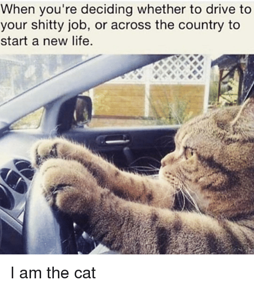 Driving, Memes, and Drive: When you're deciding whether to drive to  your shitty job, or across the country to  start a new life. I am the cat