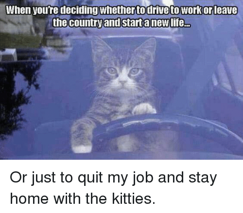 how to say i quit my job