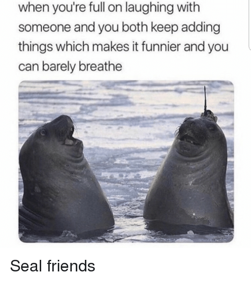 Friends, Seal, and Can: when you're full on laughing with  someone and you both keep adding  things which makes it funnier and you  can barely breathe Seal friends