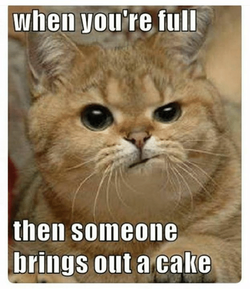 You Re Amazing Animals: When You're Full Then Someone Brings Out A Cake