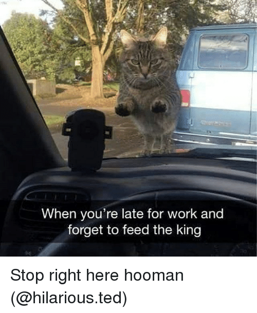 Funny, Ted, and Work: When you're late for work and  forget to feed the king Stop right here hooman (@hilarious.ted)