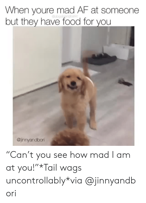 "Af, Food, and Instagram: When youre mad AF at someone  but they have food for you  @jinnyandbor ""Can't you see how mad I am at you!""*Tail wags uncontrollably*via @jinnyandbori"