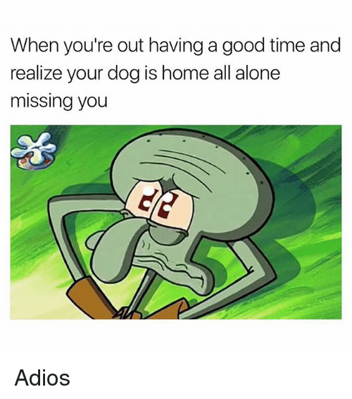 Being Alone, Memes, and Good: When you're out having a good time and  realize your dog is home all alone  missing you Adios