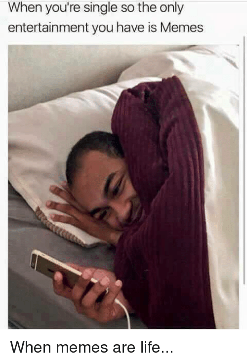 Life, Memes, and Single: When you're single so the only  entertainment you have is Memes When memes are life...