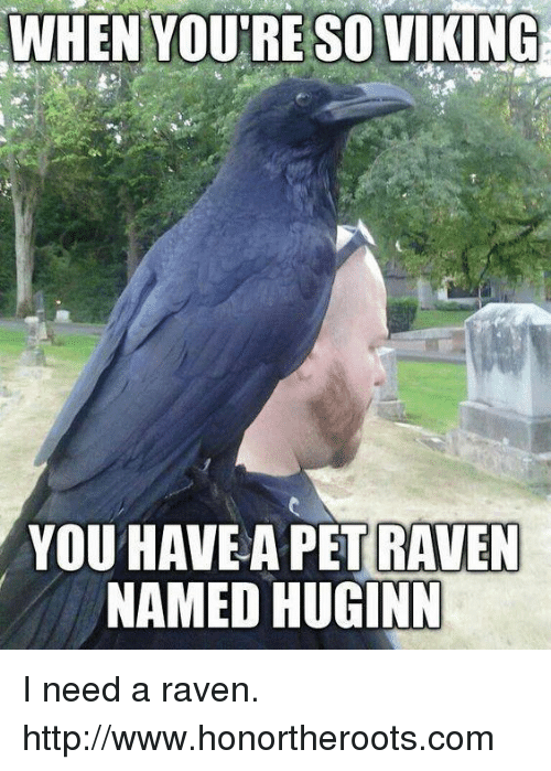 Dragonia (OUVERT A TOUS) - Page 3 When-youre-so-viking-you-have-a-pet-raven-named-11962209