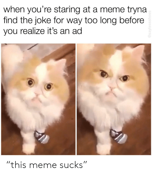 "Meme, You, and For: when you're staring at a meme tryna  find the joke for way too long before  you realize it's an ad ""this meme sucks"""