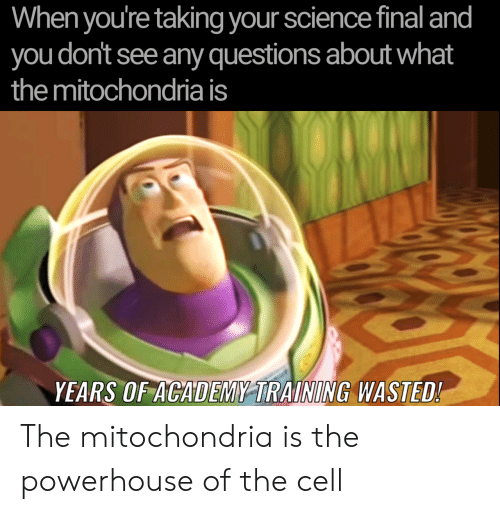 Academy, Science, and Mitochondria: When you're taking your science final and  you don't see any questions about what  the mitochondria is  YEARS OF ACADEMY TRAINING WASTED! The mitochondria is the powerhouse of the cell