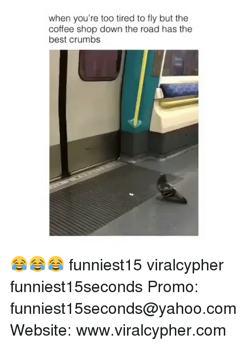 Funny, Best, and Coffee: when you're too tired to fly but the  coffee shop down the road has the  best crumbs 😂😂😂 funniest15 viralcypher funniest15seconds Promo: funniest15seconds@yahoo.com Website: www.viralcypher.com