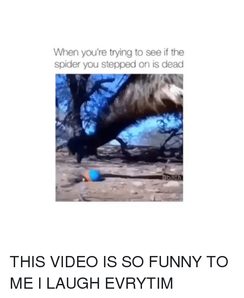 Funny, Spider, and Videos: When you're trying to see if the  spider you stepped on is dead THIS VIDEO IS SO FUNNY TO ME I LAUGH EVRYTIM