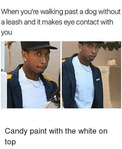 Candy, Memes, and Paint: When you're walking past a dog without  a leash and it makes eye contact with  you Candy paint with the white on top