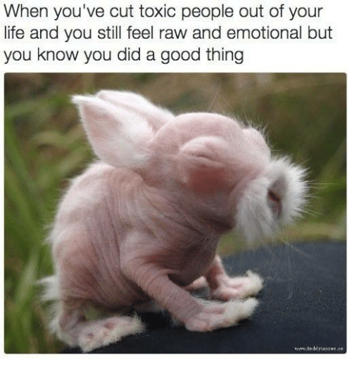 50+ Quotes About Cutting Toxic People Out Of Your Life