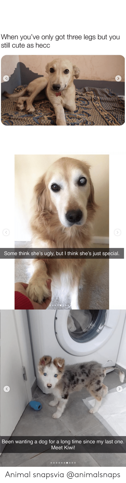 Cute, Target, and Tumblr: When you've only got three legs but you  still cute as hecc   Some think she's ugly, but I think she's just special.   Been wanting a dog for a long time since my last one  Meet Kiwi! Animal snapsvia @animalsnaps