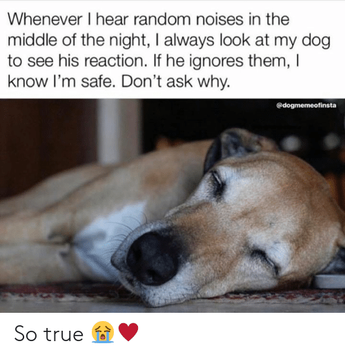 Memes, True, and The Middle: Whenever I hear random noises in the  middle of the night, I always look at my dog  to see his reaction. If he ignores them, I  know l'm safe. Don't ask why.  @dogmemeofinsta So true 😭♥️