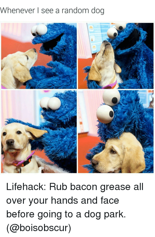 Whenever I See a Random Dog Lifehack Rub Bacon Grease All
