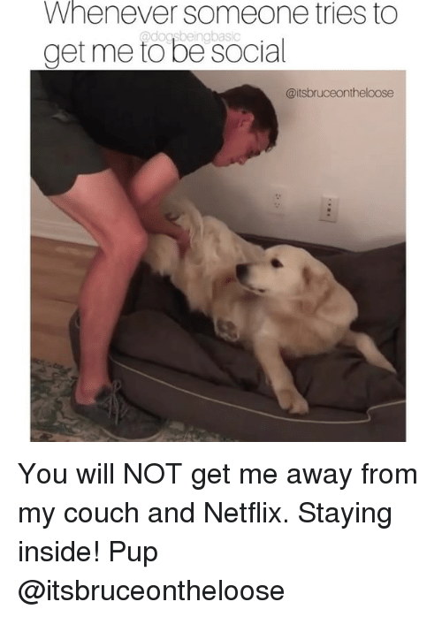 Memes, Netflix, and Couch: Whenever  someone tries to  @dogsbeinabasic  get me to be social  @itsbruceontheloose You will NOT get me away from my couch and Netflix. Staying inside! Pup @itsbruceontheloose