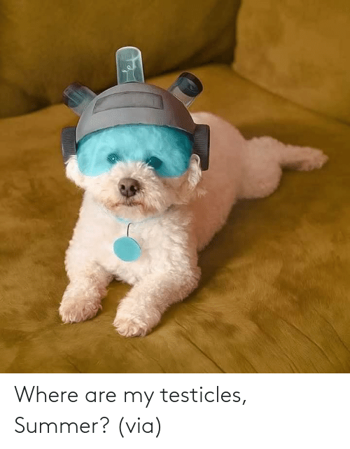 Aww, Reddit, and Target: Where are my testicles, Summer?(via)